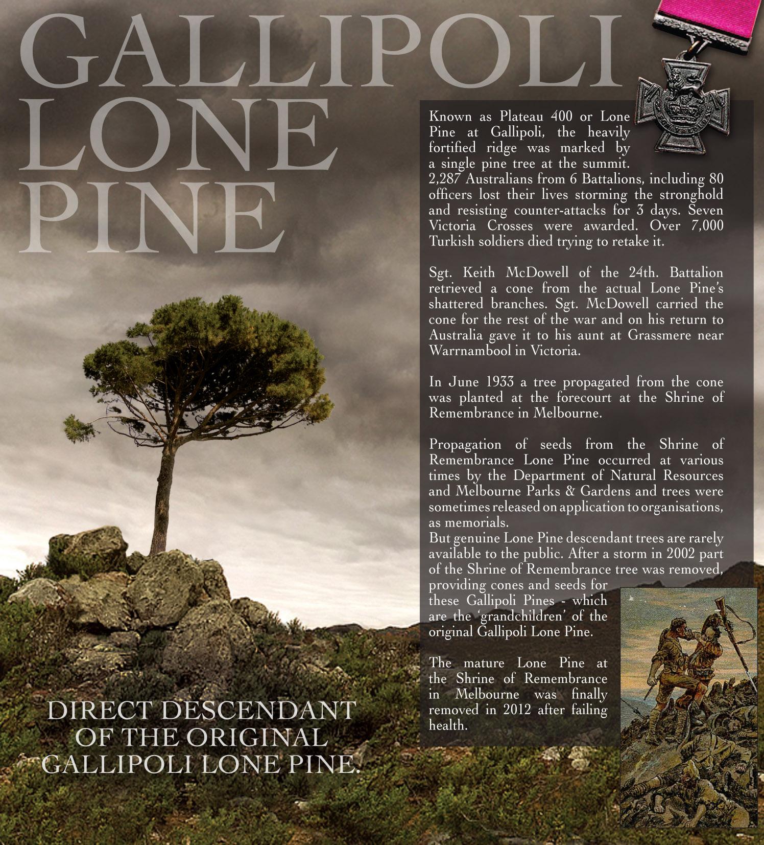 Lone Pine Tree Brochure spread