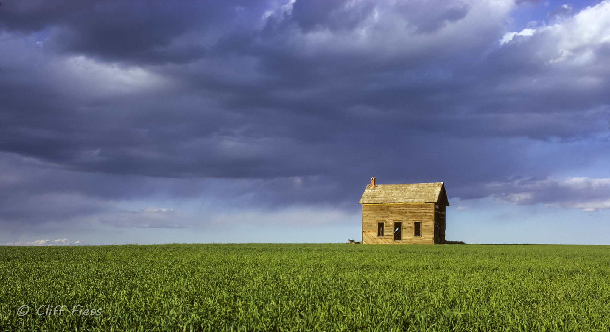 Abandoned house in a wheat field