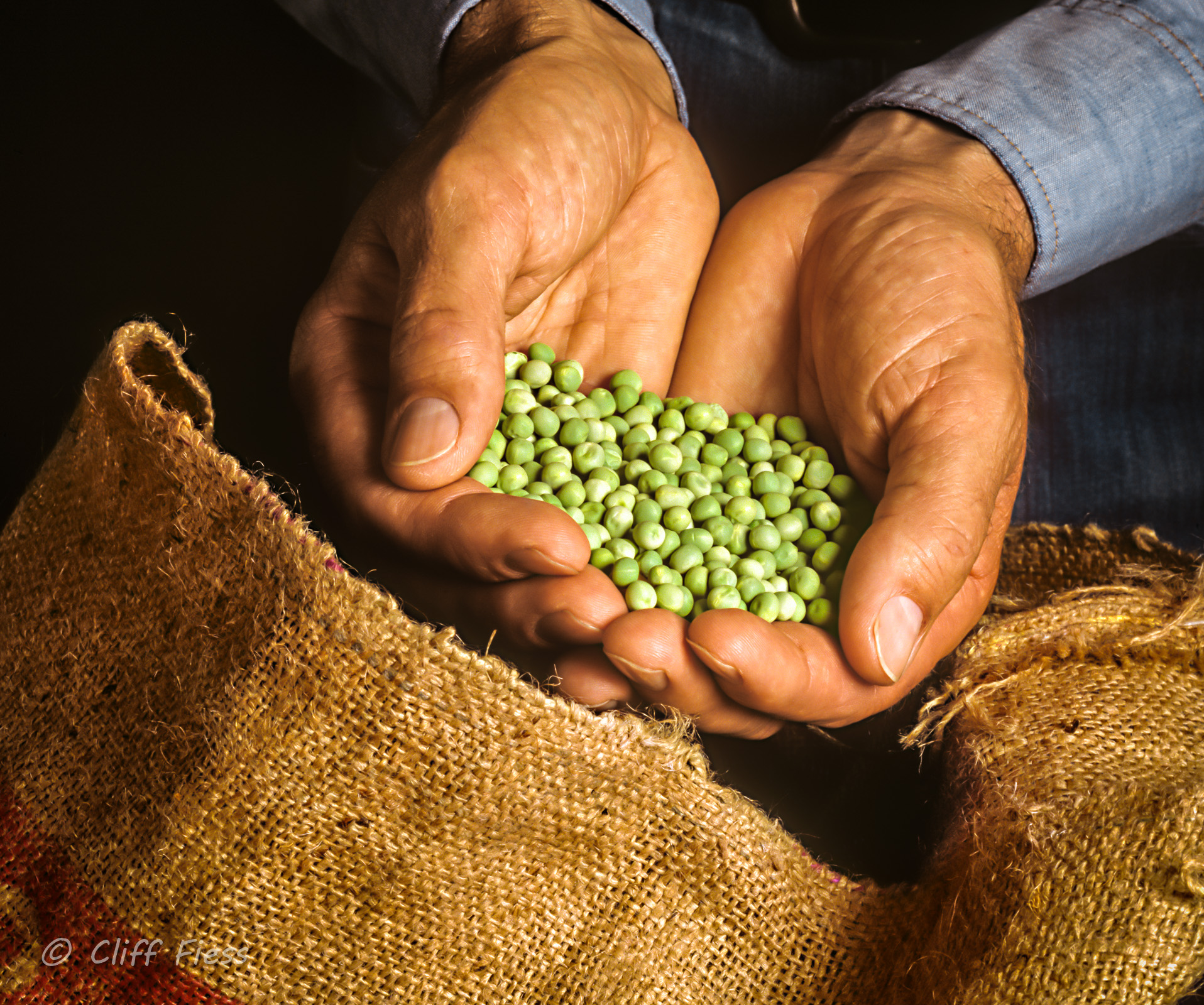 A-farmer-examining-some-peas.jpg