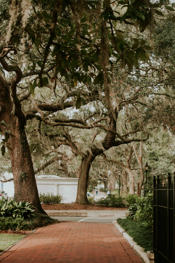 Oh, the Spanish moss, which even on a sunny day, trails from every branch like ghostly innards. It is not a parasitic plant, by the way. It grows on trees but does not take nutrients from its host nor does it set roots.