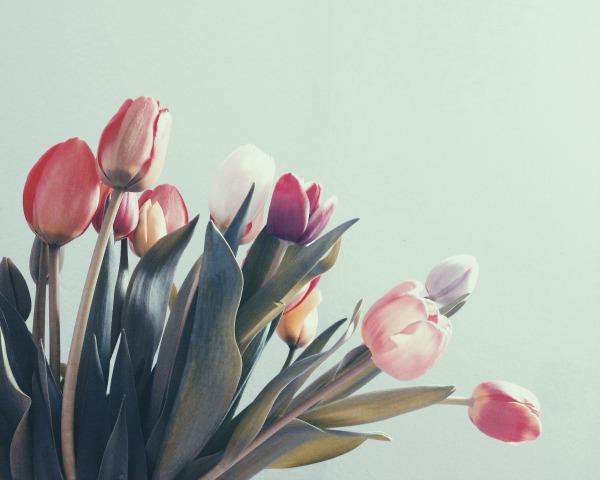 tulips_600.jpg
