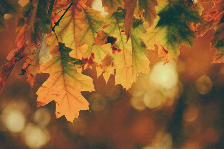 leaves_1500.jpg