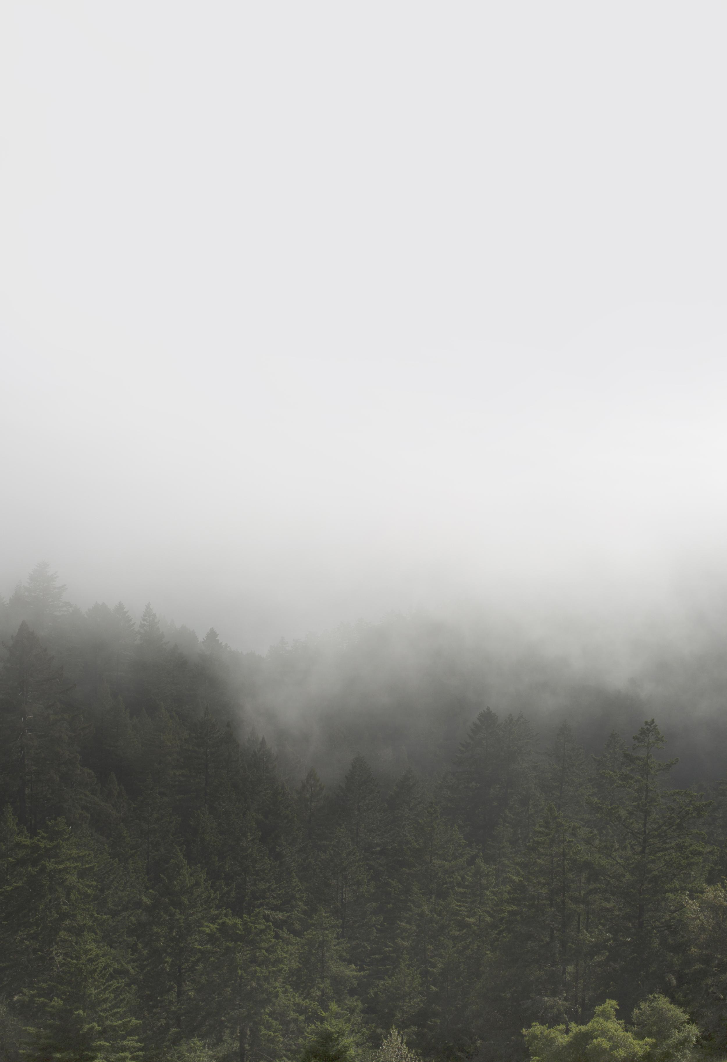 Mount Tamalpais | © Hannah Garvin