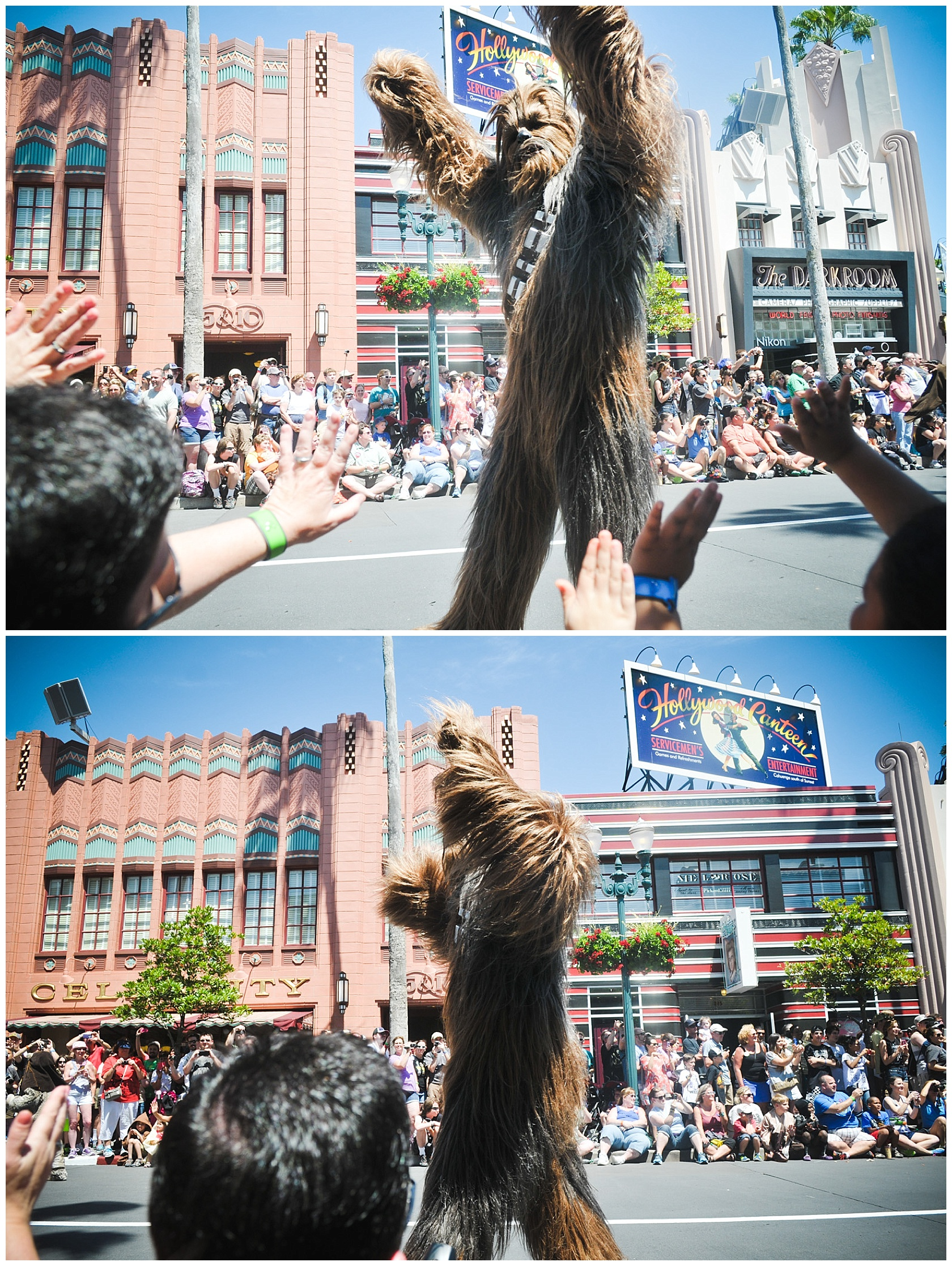 The amazing Chewbacca!