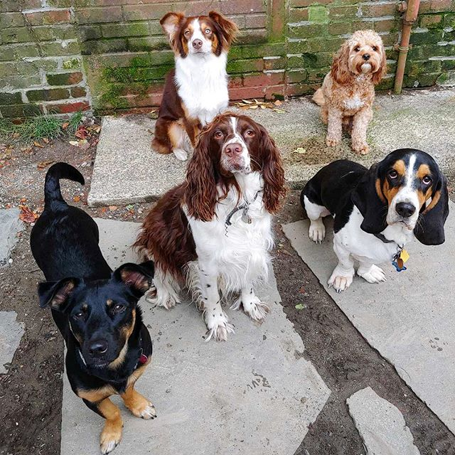 Troy Dog Daycare squad is strong! Some of our favorite Tuesday regulars - Carly, Maggie, Milka, Teagan and Bentley! ❤️