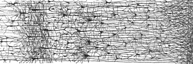 Cajal_cortex_drawings