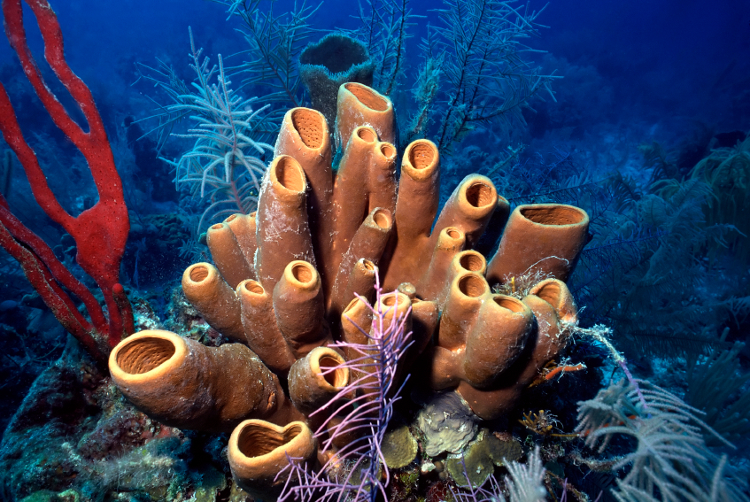 Sponges. No known nervous tissue here. Still an animal. Source