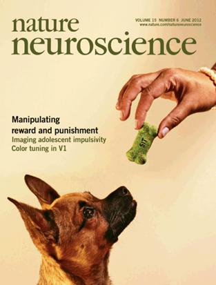 Figure 1. Reinforcement Learning.