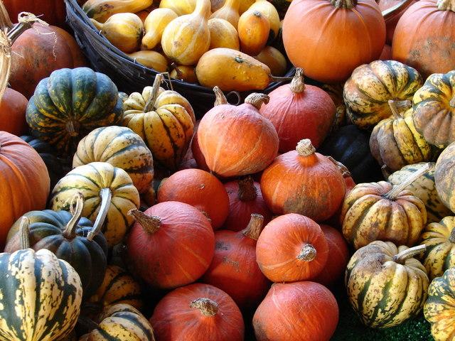 Gourds! Squash! Author:  Ian Patterson.