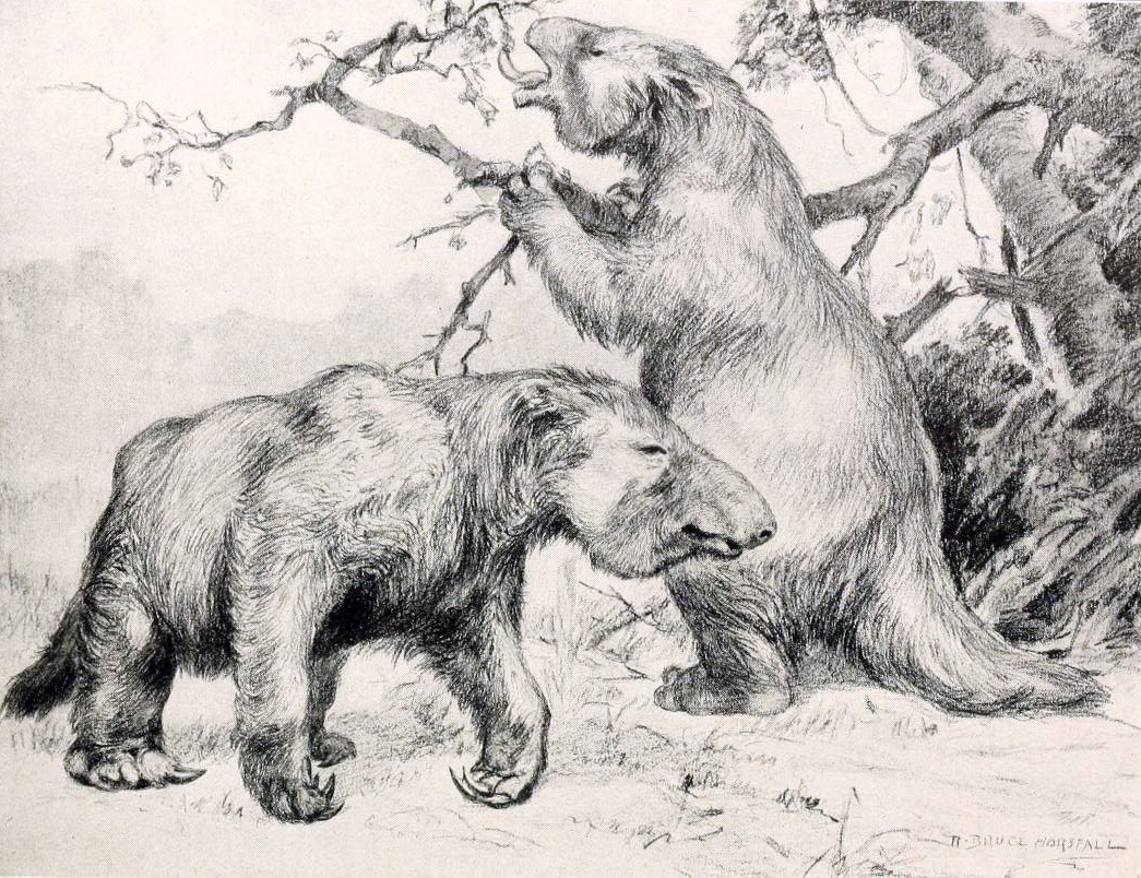 Restoration of Giant Ground Sloths (  M. americanum)  by   Robert Bruce Horsfall . Source: Wikipedia