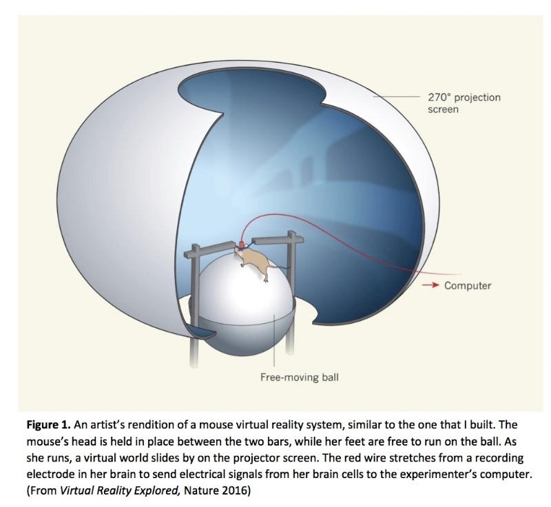 Minderer, M., Harvey, C. D., Donato, F. & Moser, E. I. Neuroscience: Virtual reality explored.  Nature   533,  324–325 (2016)