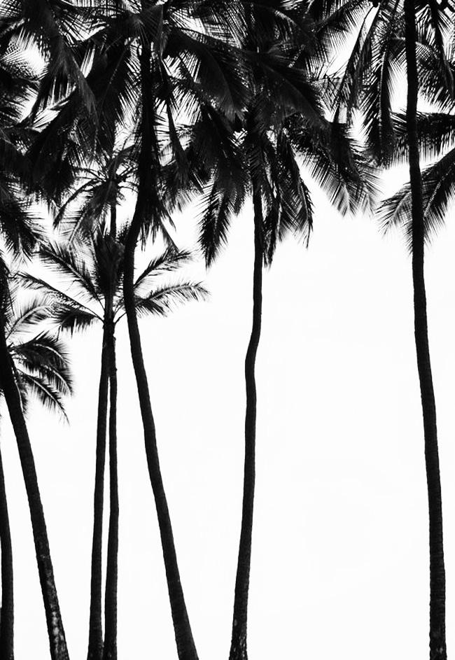 black-and-white-6.jpg