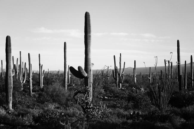 desert-dwellers-34.jpg
