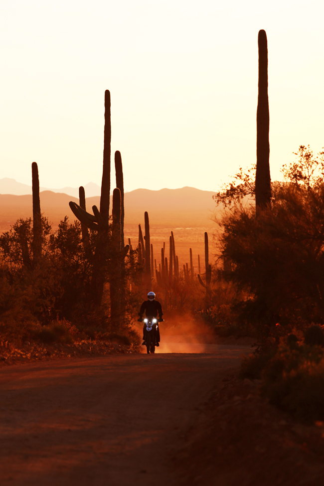 desert-dwellers-41.jpg