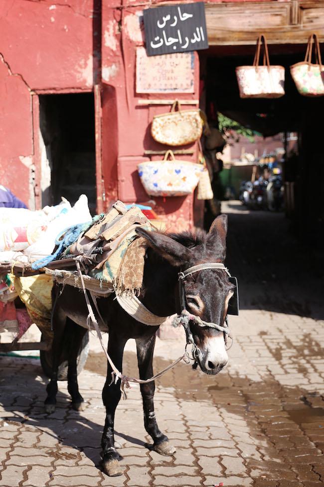 travel-diaries-marrakech-4.JPG