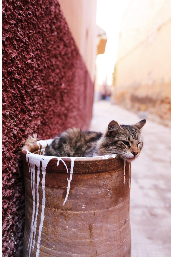 travel-diaries-marrakech-21.jpg