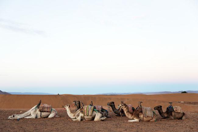 travel-diaries-marrakech-45.JPG