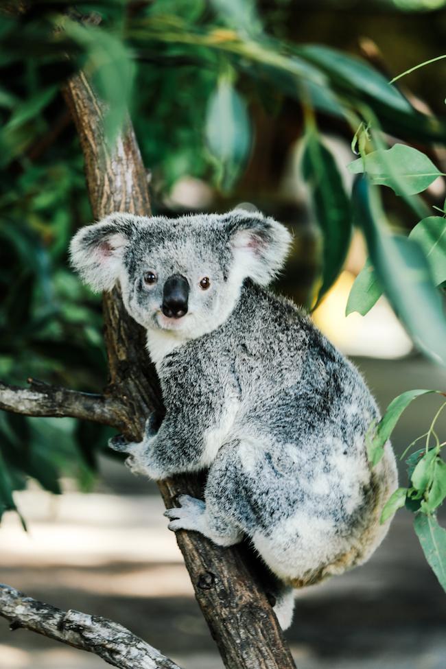 teva-australia-currumbinwildlifesanctuary-20.jpg