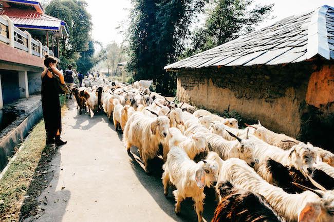 dharamsala-123.jpg
