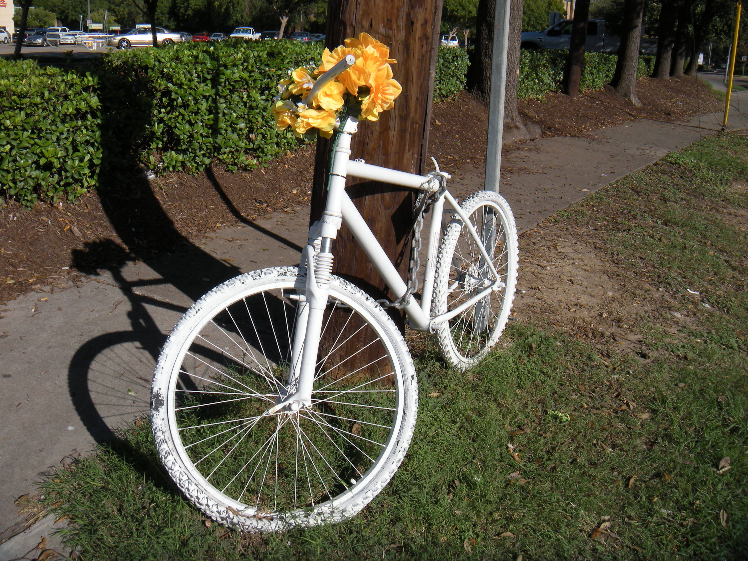 I've seen several of these white bicycles with flowers propped around town. Does anybody know why?