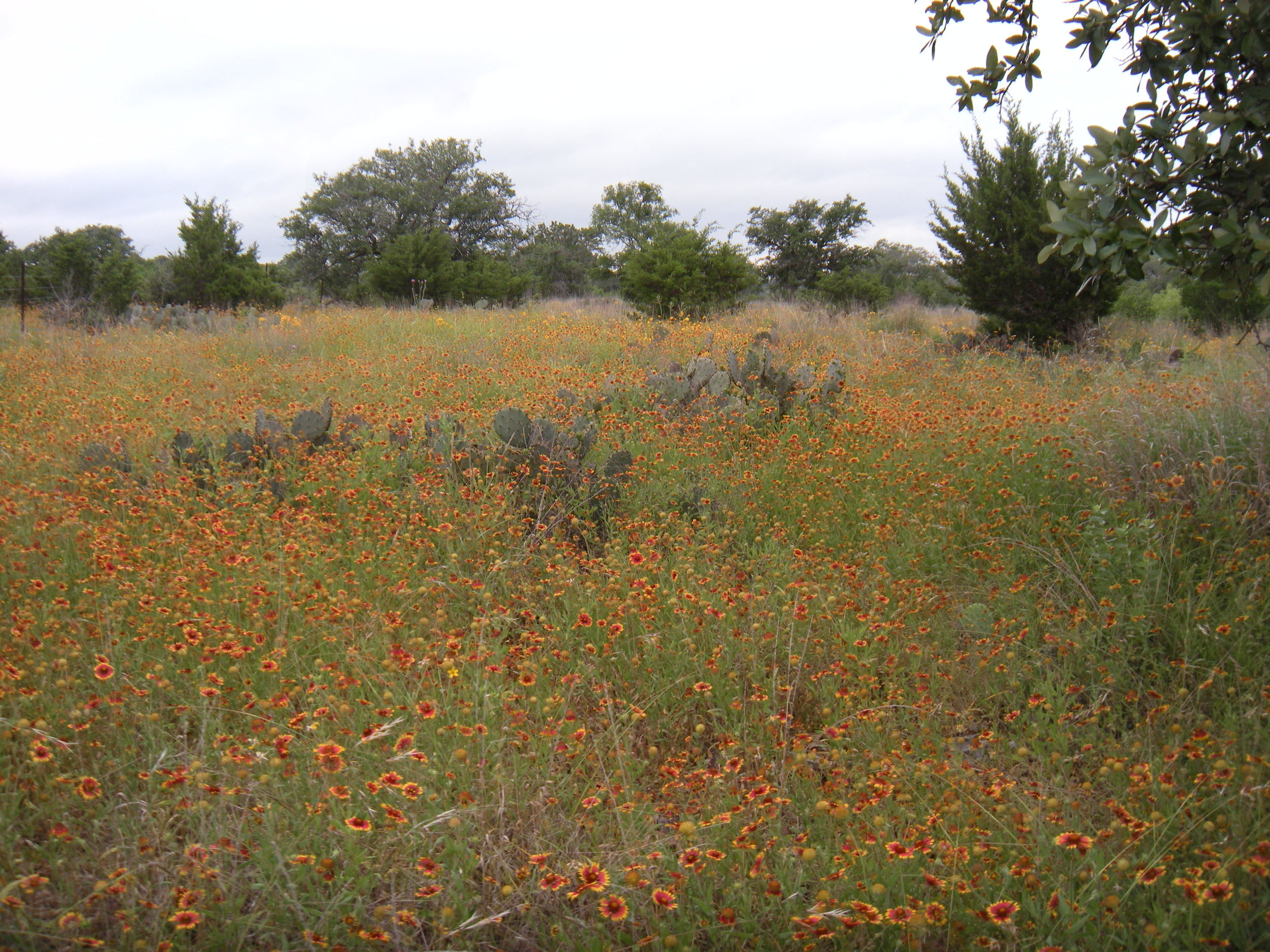 This field of wildflowers is right across the street from our house.  This part of Texas is beautiful this time of year.