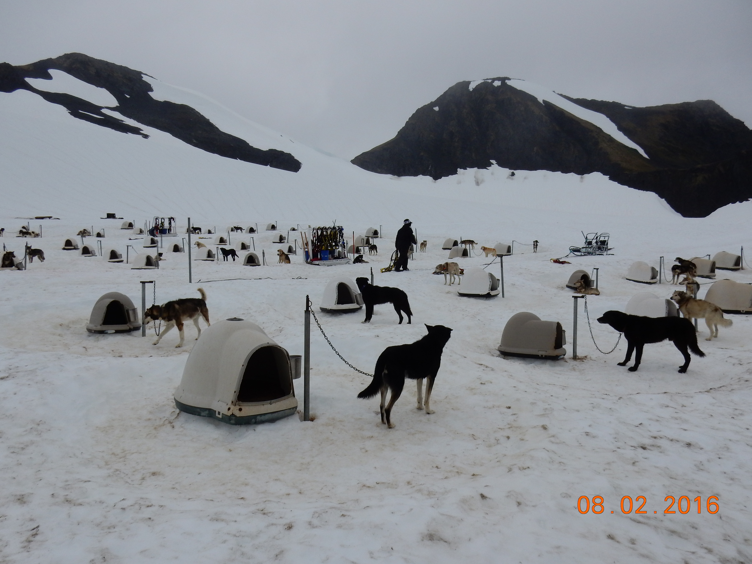 Summer camp for dogs. Trip would not fit in.