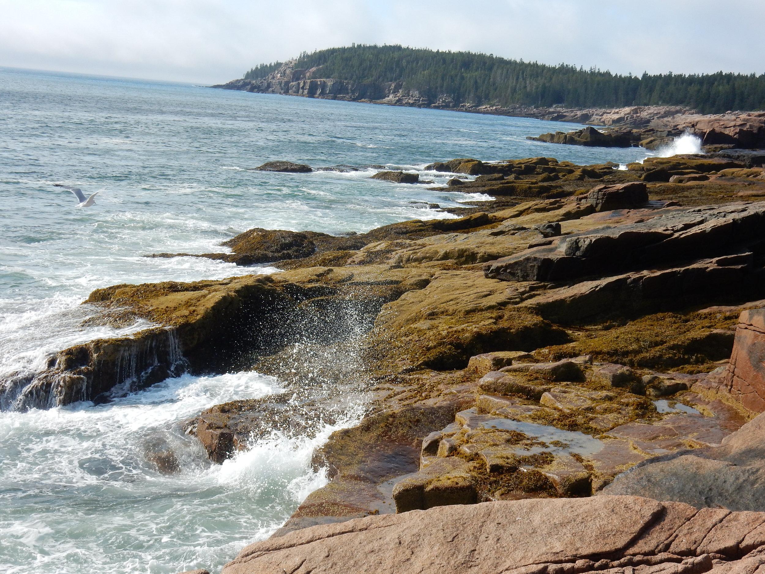 Acadia's dramatic coast.