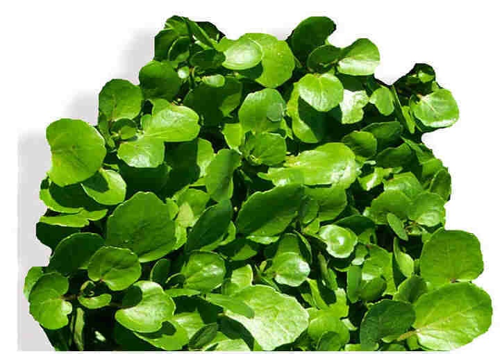 Find more great watercress facts and recipes at www.watercress.co.uk