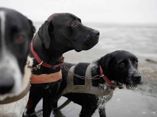 Hundeschlitten - Nationalpark Wattenmeer