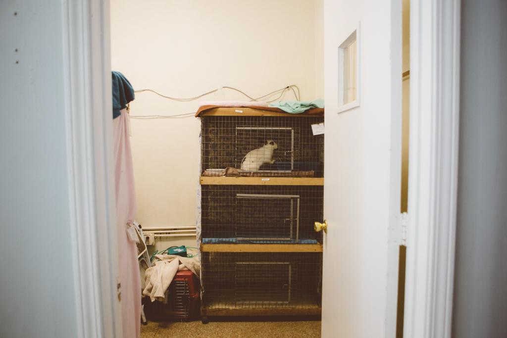 Gracie Hagen Red Door Animal Shelter 4.jpg