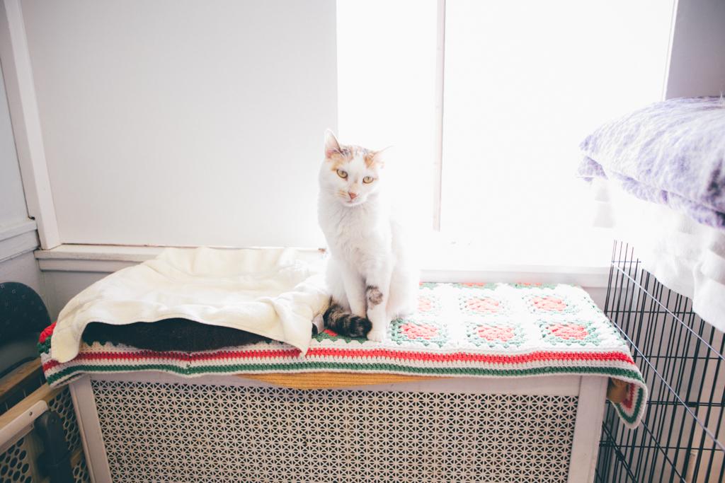 Gracie Hagen Red Door Animal Shelter 6.jpg
