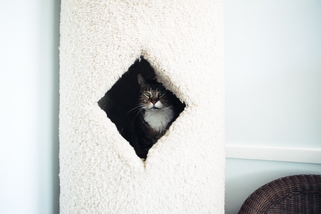 Gracie Hagen Red Door Animal Shelter 8.jpg
