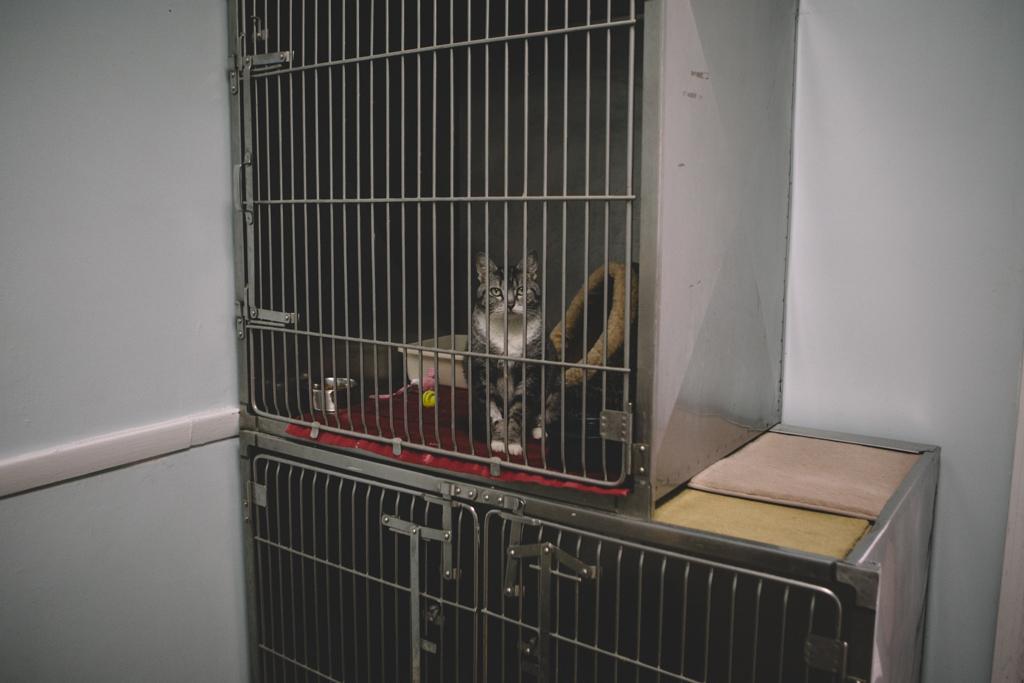 Gracie Hagen Red Door Animal Shelter 10.jpg