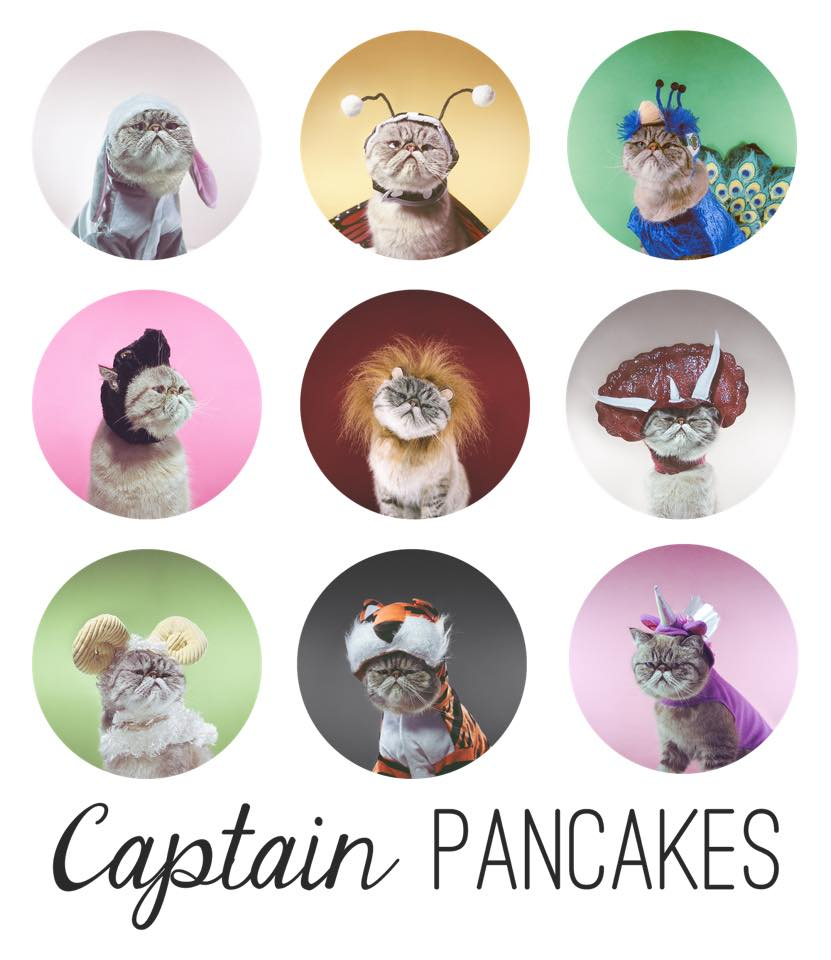 Captain Pancakes internet famous cat gracie hagen