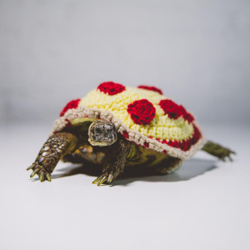 halloween 2018 russian tortoise pizza.jpg