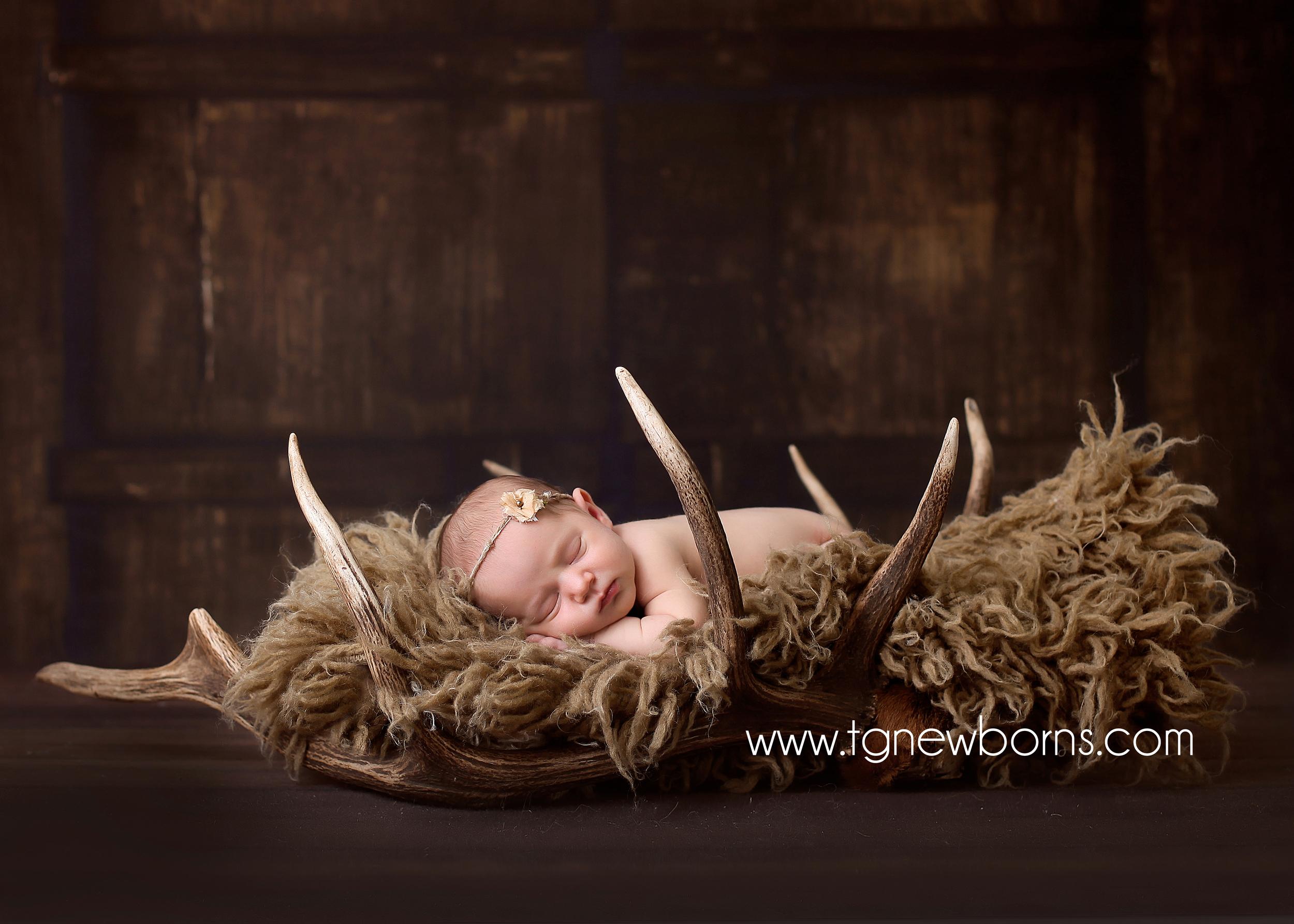 newborn deer