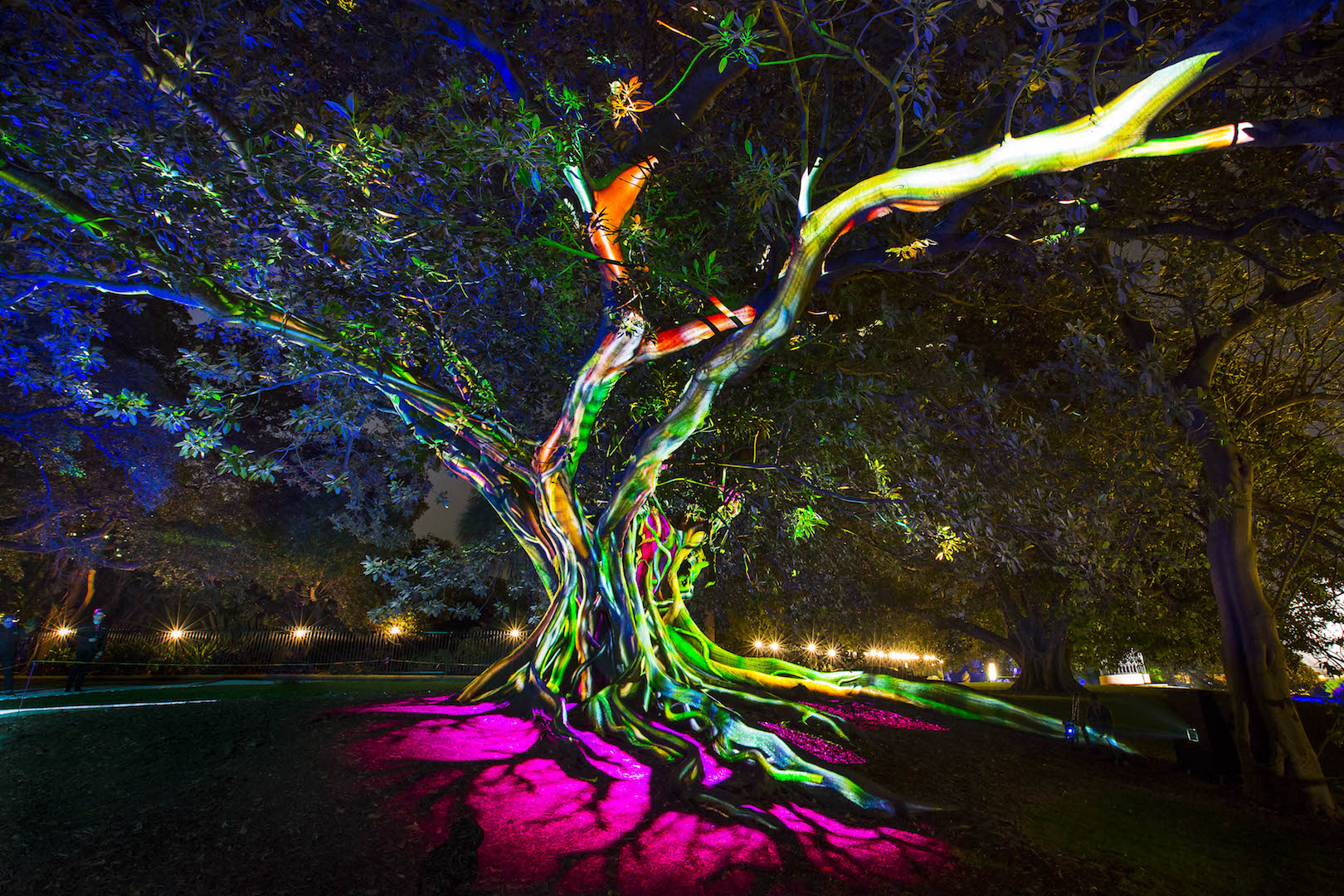 Vivid Sydney 2016_Synthesis-The Royal Botanic Garden Sydney_CREDIT Destination NSW_AW1307.jpg