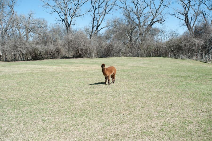 Austin_Travel_Writer_Photographer_Hyatt_Lost_Pines_43.jpg
