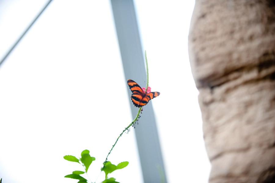 Austin_Travel_Writer_Photographer_butterflies003.jpg