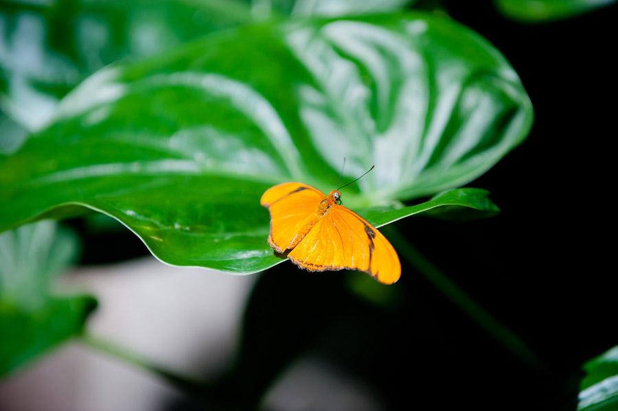 Austin_Travel_Writer_Photographer_butterflies006.jpg