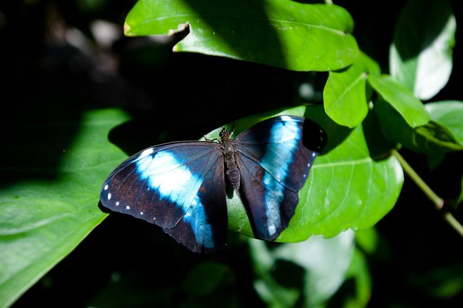 Austin_Travel_Writer_Photographer_butterflies007.jpg