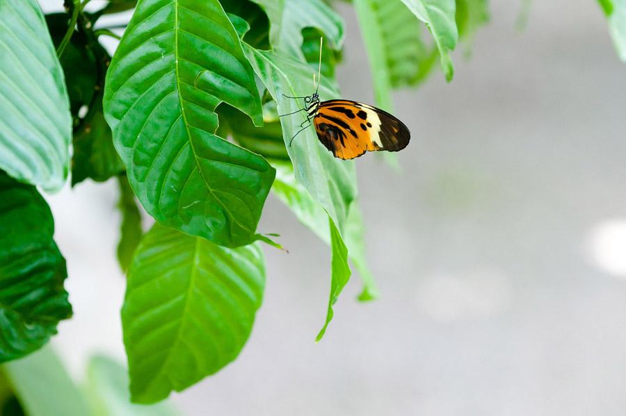 Austin_Travel_Writer_Photographer_butterflies005.jpg