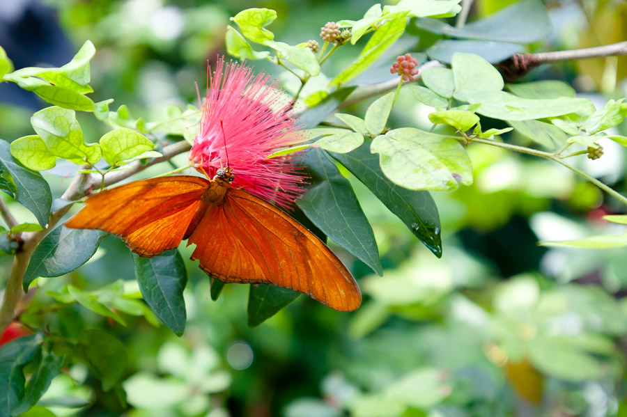 Austin_Travel_Writer_Photographer_butterflies008.jpg