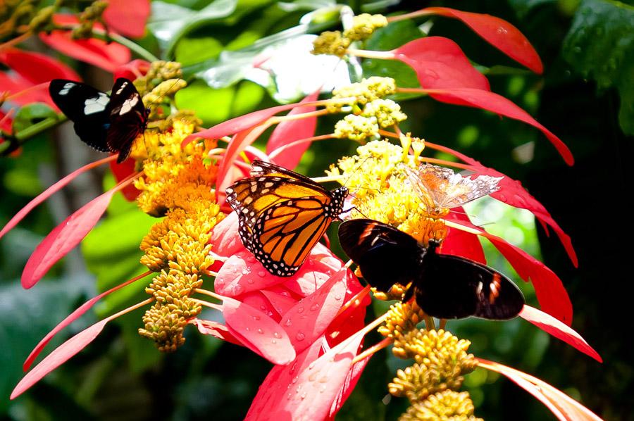 Austin_Travel_Writer_Photographer_butterflies010.jpg