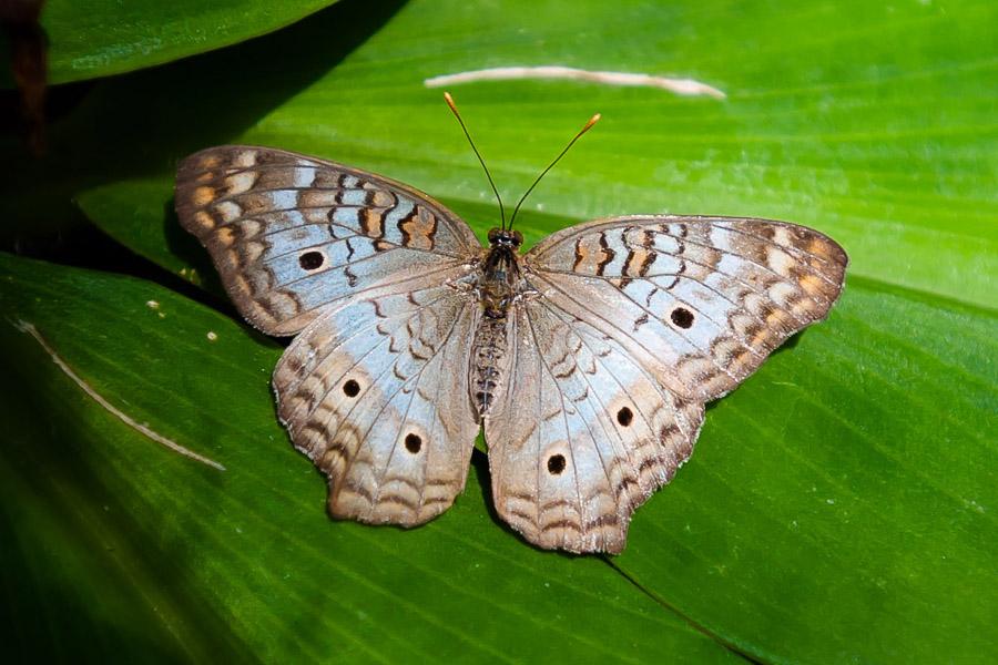 Austin_Travel_Writer_Photographer_butterflies009.jpg