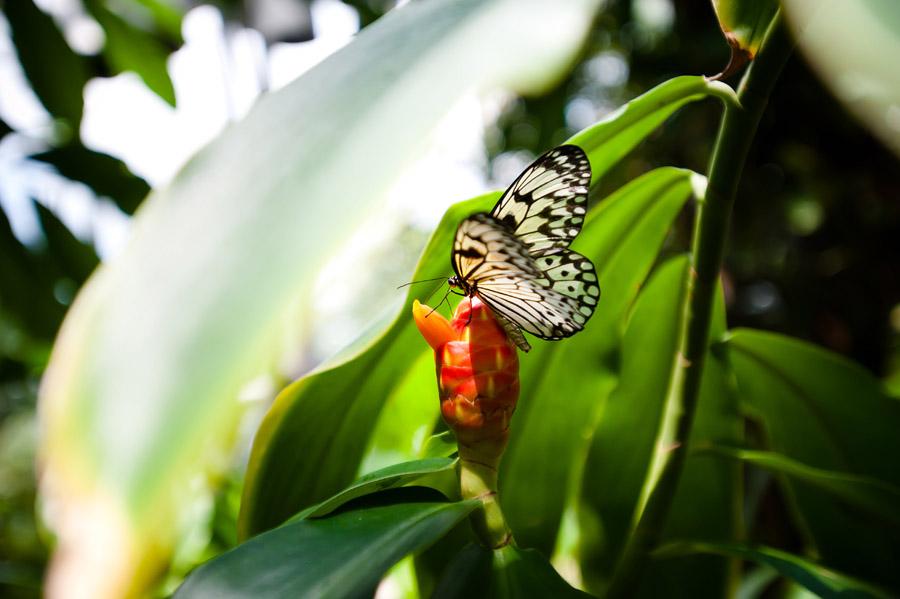 Austin_Travel_Writer_Photographer_butterflies013.jpg