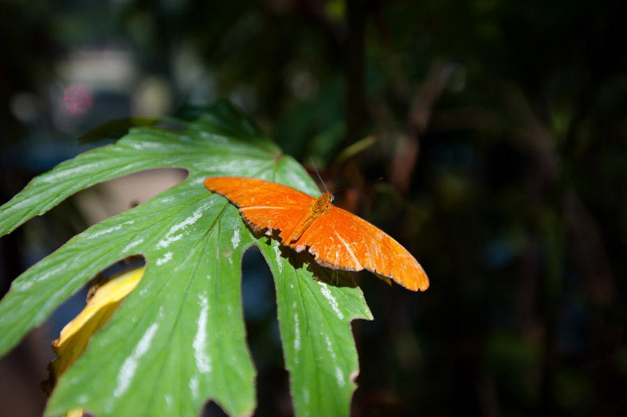 Austin_Travel_Writer_Photographer_butterflies015.jpg