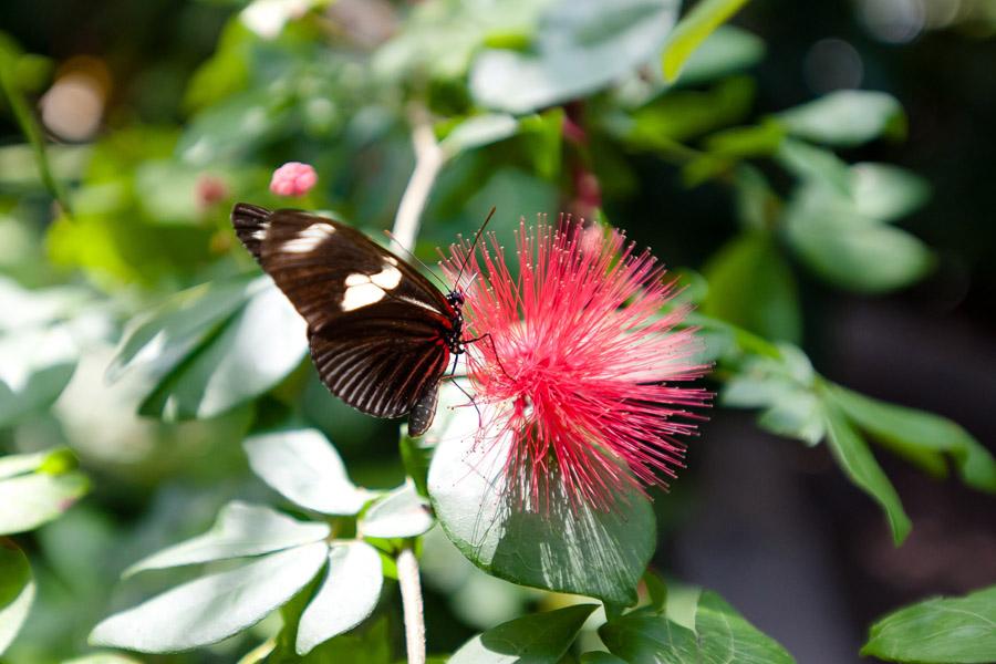 Austin_Travel_Writer_Photographer_butterflies016.jpg
