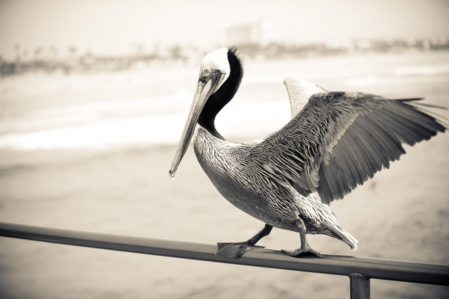 Austin_Travel_Writer_Photographer_Huntington_Beach017.jpg
