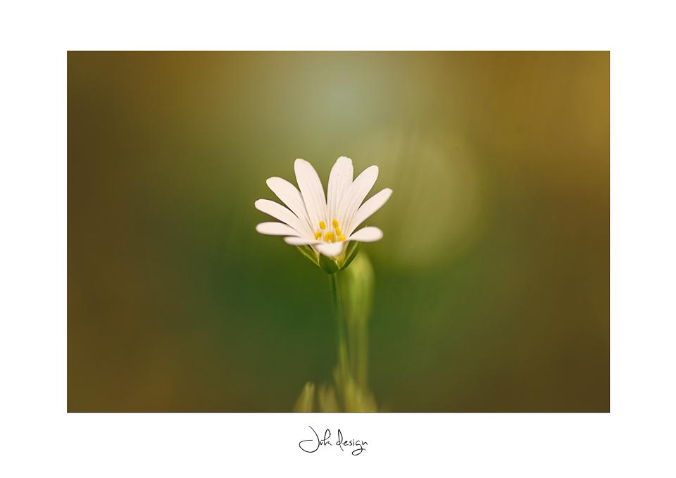 Blomsten